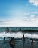 Haifische im Meer Stockbild