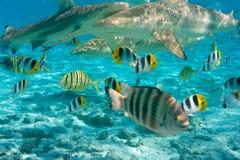Haifische in Ozean lizenzfreie stockbilder