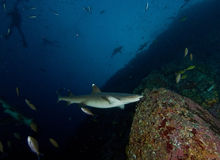 Haifische in Südafrika lizenzfreies stockbild