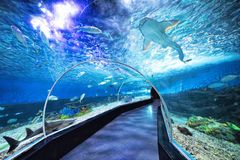 Haifische und Fische am Ozean-Park in Manila Philippinen lizenzfreies stockfoto