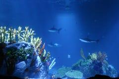 Haifische und Koralle Stockfotografie