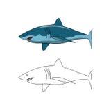 Haifischfarbe und -entwurf Stockbild