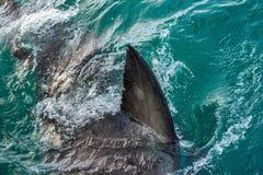 Haifischflosse Überwasser lizenzfreies stockfoto