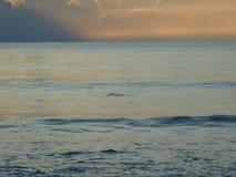 Haifischflosse w?hrend des Sonnenaufgangs in Florida lizenzfreies stockfoto