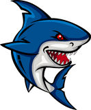 Haifischkarikatur für Sie Entwurf Stockfotografie