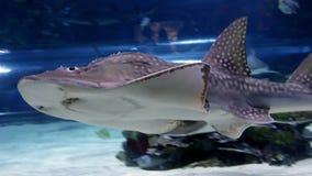 Haifischschwimmen Stockbild
