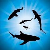 Haifischunderwater und -tageslicht stock abbildung