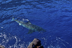 Haifischwarnung lizenzfreies stockfoto