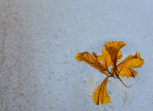 Haiku Στοκ φωτογραφίες με δικαίωμα ελεύθερης χρήσης