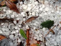 Hail. And autumn leaves on the ground royalty free stock image
