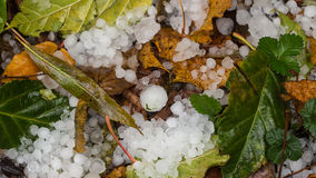 Hail. Closeup of ice hail in the garden stock photo