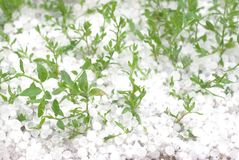 Hail (freeze grass) Royalty Free Stock Photography