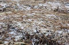 Hail on the grass Royalty Free Stock Photography