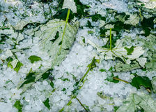 Hail ice balls in grass. After a heavy rain Royalty Free Stock Photo