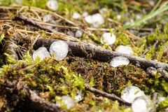 Hail lies on the forest floor Royalty Free Stock Images