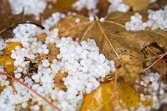 Hail On The Ground With Fallen Leaves Stock Photos