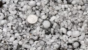 Hail sized with a larger coin, hailstones on the ground after hailstorm, hail of great size royalty free stock photo