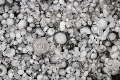Hail sized with a larger coin, hailstones on the ground after hailstorm, hail of great size Stock Photo