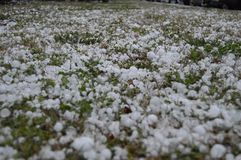 Hail Storm Aftermath royalty free stock photo