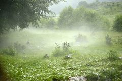 Hail storm and fog in the forest. Hail storm and mystic fog in the forest Royalty Free Stock Photography