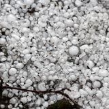 Hailstones on the ground after hailstorm, hail of great size, hail sized with a larger coin stock image