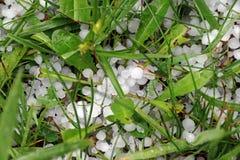 Hailstones on the ground Stock Image