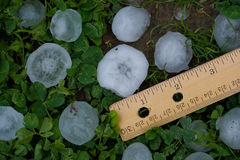 Hailstones from Severe Summer Storm Royalty Free Stock Photo