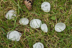 Hailstones. Some hailstones in the gras Stock Photography