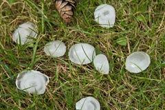 Hailstones Stock Photography