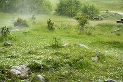 Hailstorm e nebbia nella foresta Fotografie Stock