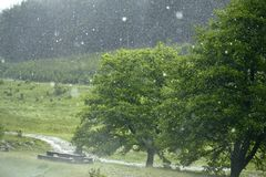 Hailstorm in the forest Stock Images