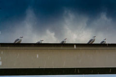Hailstorm At The Gold Coast. A beautiful warm day turned into a hailstorm at the Gold Coast City, Queensland, Australia. The seagulls seemed to be a bit puzzled royalty free stock photo