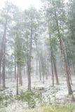 Hailstorm i skogen Arkivfoton