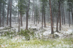 Hailstorm i skogen Royaltyfri Foto