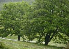 Hailstorm nella foresta Fotografie Stock Libere da Diritti