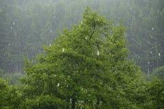 Hailstorm nella foresta Fotografia Stock