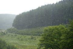 Hailstorm nella foresta Immagine Stock