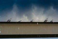 Hailstorm på Goldet Coast Royaltyfri Foto