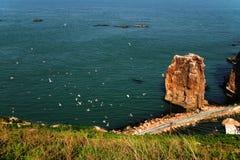 Hailu海岛黑被盯梢的鸥 图库摄影