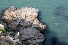 Hailu island black-tailed gulls Royalty Free Stock Photo
