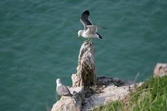 Hailu island black-tailed gulls Royalty Free Stock Images