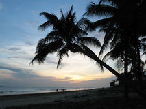 Hainan beach with palm trees Stock Photography