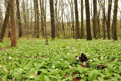 Hainich国家公园,山毛榉森林保护,德国 免版税库存照片