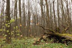 Hainich Nationaal Park, Duitsland Stock Foto's