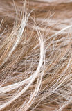 Hair Stock Image