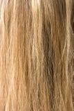 Hair. Woman long blond hair texture Stock Photos