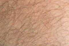 Free Hair Stock Photo - 43888260