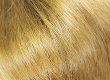 Hair background Stock Photos