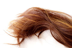 Hair. Brown hair. Isolated on white background Royalty Free Stock Image