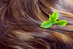 Hair care concept: beautiful shiny hair with highlights and green leaves